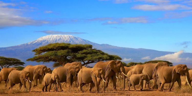 kilimanjaro climb - Copy